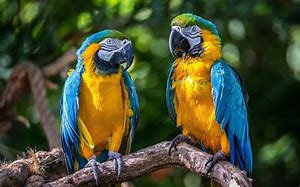 Year 5 – Macaws and Chipmunks