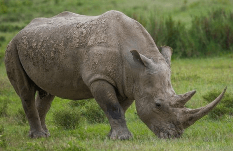 Year 2 – Rhinos and Hippos