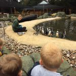 We saw penguins being fed.