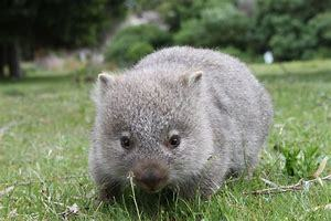 Year 5 – Wombats and Mountain Lions